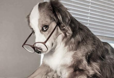 Pet Finance